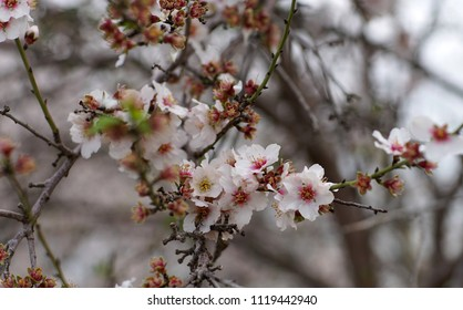 agricultural landscape, branch of a blossoming fruit tree