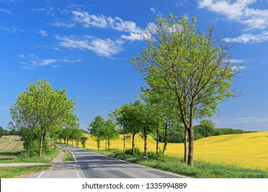 Agricultural landscape with canola field and country road with ashes in Schleswig-Holstein, Germany. With blue sky and white clouds.