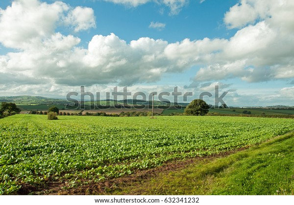 Agricultural landscape in the English countryside.