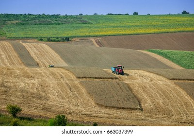 Agricultural Landscape - Harvest of wavy farmland with wheat, road, corn, tractor, sunflower and plowing