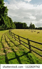 Agricultural landscape and sheep in the English countryside.