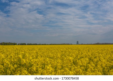 Agricultural landscape with yellow field of rape, close to Malmo city, Skane Sweden