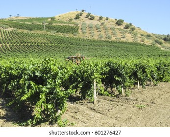 Agricultural machine in Vineyard, Sicily, Italy