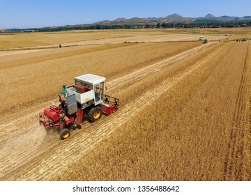 Agricultural machinery harvesting ripe wheat
