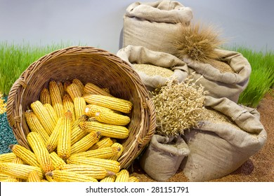 Agricultural product assortment, corn cob in basket, cereals in sacks and growing wheat in background