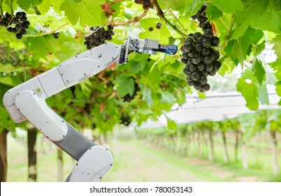 Agricultural robot assistant harvesting grapes to analyze the grape growth, Smart farm concept