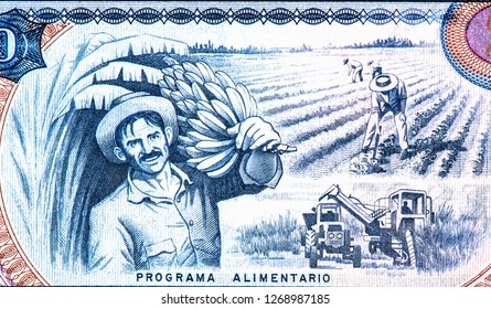 Agricultural Scene on 20 Pesos 2006 Banknote from Cuba. 20 pesos Cuban banknote. Cuban pesos bank note in the national currency of Cuban, Close Up UNC Uncirculated - Collection.