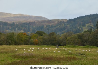 An Agricultural Scene In The Trossachs, Perthshire.