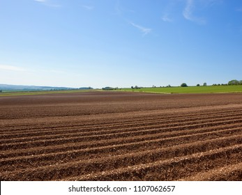 agricultural scenery with a newly planted potato crop in chalky soil near Sledmere under a blue sky in the Yorkshire Wolds in Summer