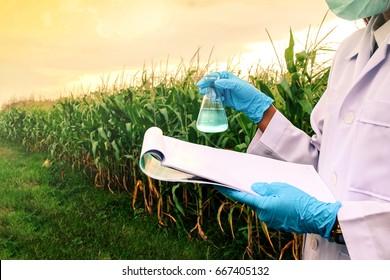 Maatalouden tutkija tutkii kasveja/sairauksia maissiviljelmillä. Bioteknologia tutkii kasvien lehtiä tauti. Tutkija havainnointi/analysoi kemiallisia reaktioita maissipellolla käyttäen raportti/laboratoriotyökaluja.