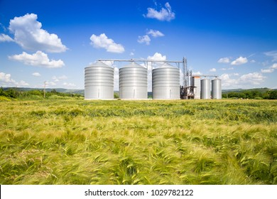 Agricultural silo with wheat driven by wind in the foreground - Storage and drying of cereals, wheat, corn, soy, sunflower against the blue sky with white clouds