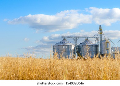 Agricultural Silos - Building Exterior, Storage and drying of grains, wheat, corn, soy, sunflower against the blue sky with rice fields