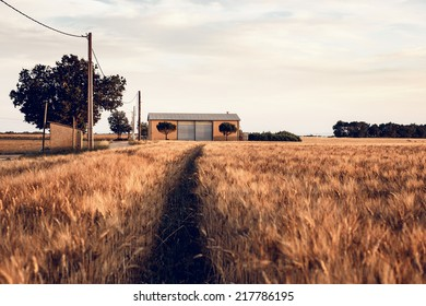 Agricultural summer landscape in Provence, France