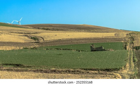 Agricultural Summer Landscape in Sicily, Italy