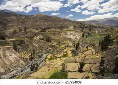Agricultural terraces and Colca river. Arequipa, Peru, South America