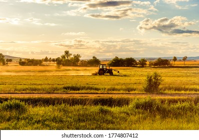 An agricultural tractor works in the field. Evening sunset
