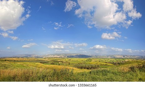 Agricultural valley landscape. Green wheat fields, arable lands, olive plantations.  Agricultural theme. Galilee harvesting. Farming paradise of Israel