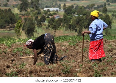 Agriculture and arable farming in Kenya