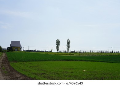 Agriculture area / Hills / Hokkaido, Japan / Natural Background