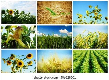 agriculture, collage of different agriculture crops