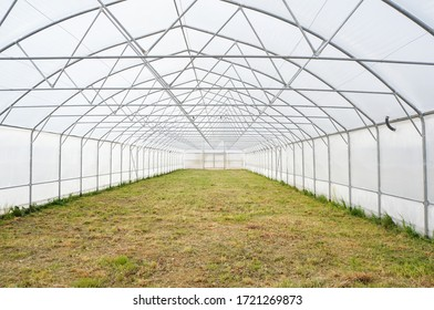 agriculture concept, industrial greenhouse inside, greenhouse management