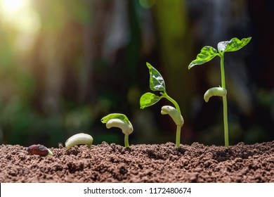 agriculture concept planting growing step with green nature and sunhine background