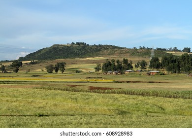 Agriculture and crop fields in Ethiopia