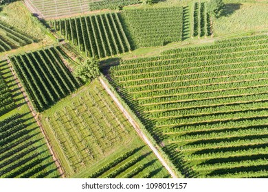 Agriculture, cultivated fields in Valtellina