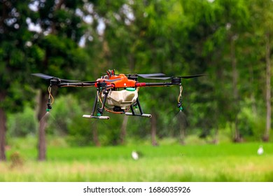 Agriculture drone fly to spray fertilizer on the rice fields in Thailand
