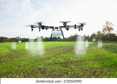 Agriculture drone fly to spray fertilizer on the rice fields
