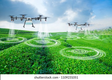 Agriculture drone scanning area to sprayed fertilizer on green tea fields, Technology smart farm 4.0 concept