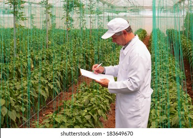 Agriculture Engineer and Greenhouse