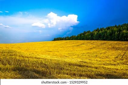 Agriculture farm field landscape. Farm field agriculture scene. Agriculture wheat field farmland. Agriculture field landscape