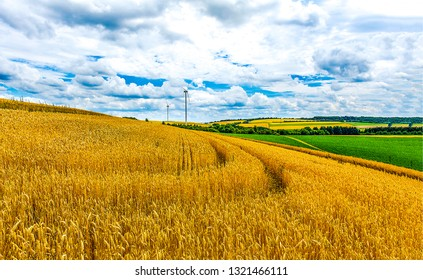 Agriculture farm field landscape. Wheat farm field agriculture view. Agriculture wheat farm field panorama. Wheat farm field scene