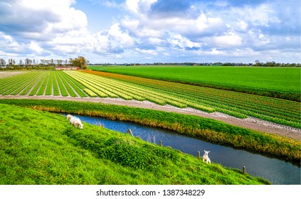 Agriculture farm field river landscape view. Sheep herd at agriculture field river. Sheeps at agriculture field river. Agriculture field river view