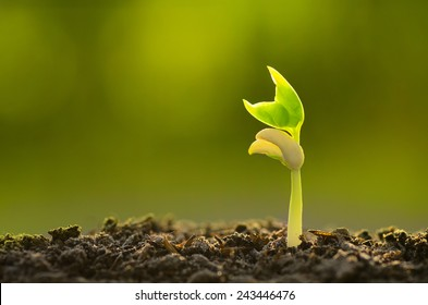 Agriculture farm with Plant seed growing concept with organic compost fertilizer