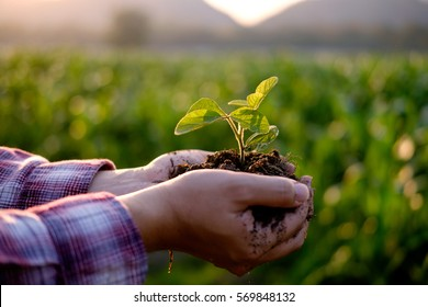 Agriculture. Farmer and nature baby plant in hands.