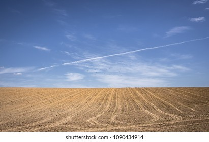 An agriculture field against a blue sky with birds flying; Poland rural landscape