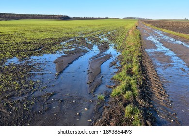 Agriculture field destruction by water erosion damage on crop or grain in farmland after rain landscape