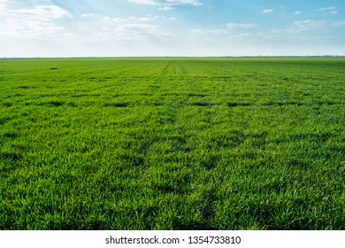 Agriculture field plants harvest green grass landscape with clouds
