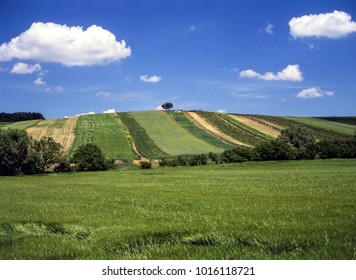 Agriculture fields in summer