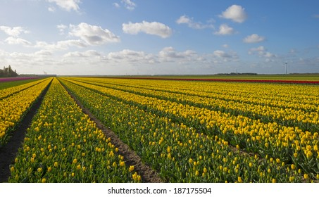 Agriculture with flowers in spring