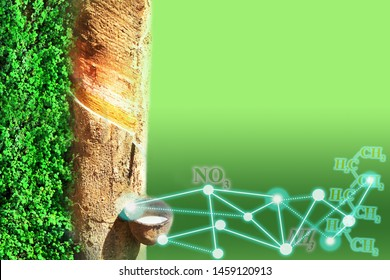 agriculture graphic of rubber tapping tree and molecular of polymer, cover leaves on gradient background and science network for space your text concept