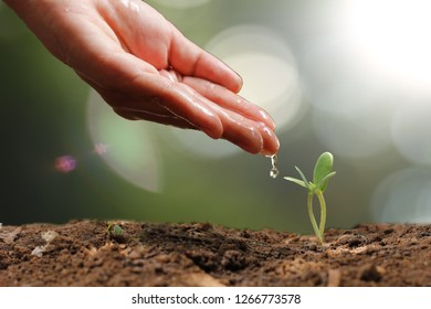 Agriculture. Growing plants. Plant seedling. Hand nurturing and water young baby plants growing in germination sequence on fertile soil with natural green bokeh background