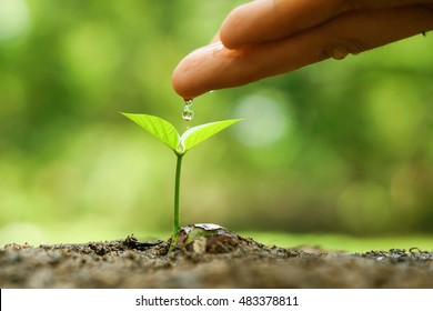 Agriculture. Hand nurturing and watering a young plant / Love and protect nature concept / nurturing baby plant