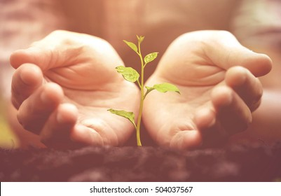 Agriculture. Hands growing and nurturing tree growing on fertile soil  / nurturing baby plant / protect nature