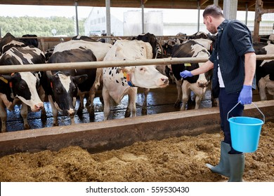 animal husbandry images stock photos vectors shutterstock
