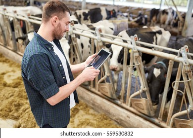 agriculture industry, farming, people, technology and animal husbandry concept - young man or farmer with tablet pc computer and cows in cowshed on dairy farm