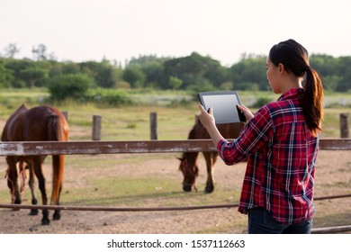 agriculture industry farming technology and animal husbandry concept - young girl or farmer with tablet pc computer and horse in farmland.