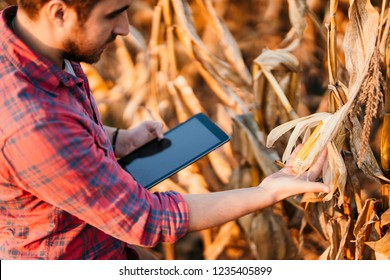 Agriculture industry - People using technology in agriculture. Details of harvest